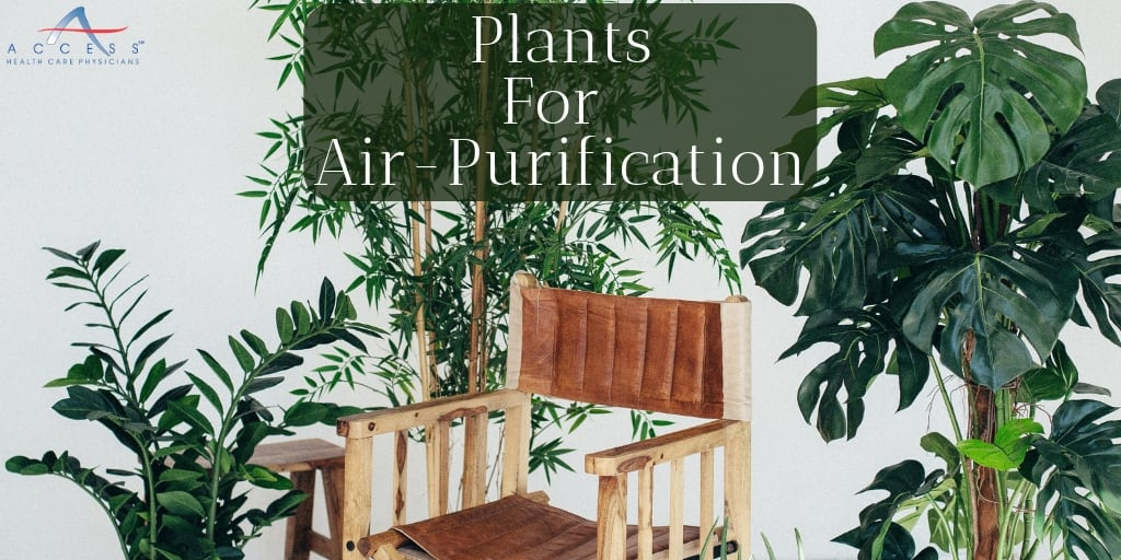 Plants to Improve Air Quality